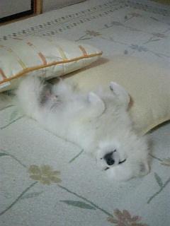 幸せな眠りシリーズ1 ~爆睡~