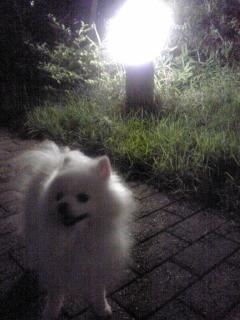 夜の散歩をしないかね、ロック。