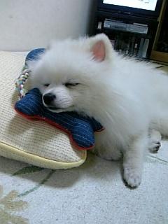 幸せな眠りシリーズ2~あご枕でお昼寝~」