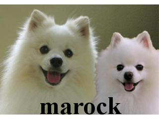 marock実写版