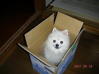 ロックは、我が家の箱入り息子です♪