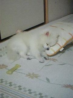 ロックの幸せな眠りシリーズ3~枕は必需品~