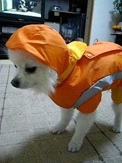 大雨キタ~~~~~ッΣ(^∇^;)~