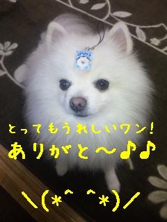 871_20100126231840.jpg